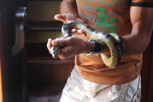 Little Anaconda that Edgine found swimming around the Perolita.  Don't worry, no snakes were harmed in the production of this blog